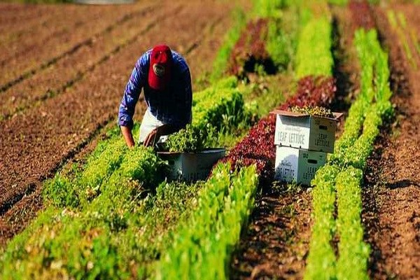 agricoltori lavoro
