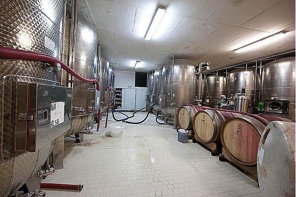 Agricoltura, azienda vinicola