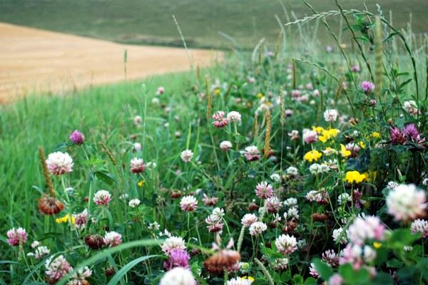 Agricoltura biologica, biodiversità