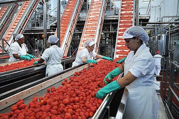 Agricoltura, lavorazione pomodoro, agroindustria