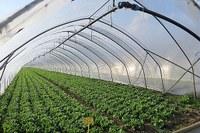Agricoltura, serra, azienda agricola