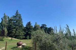 Agriturismo, campagna, fattoria, Abbadessa San Lazzaro