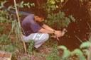 anatra fauna selvatica
