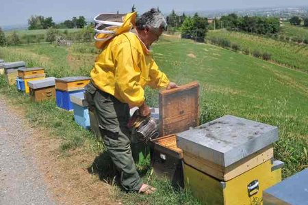 Apicoltura miele 2
