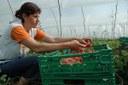 Azienda agricola, agricoltura, serra, coltivazione
