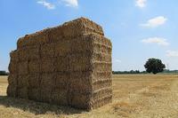 Balle di fieno, agricoltura, raccolto