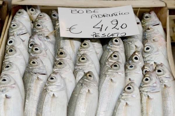 pesca bobe