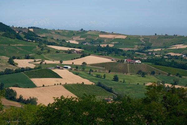 campi, agricoltura, coltivazioni