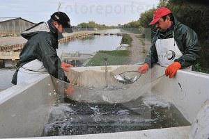 Acquacoltura, pesca, pesce, pescatori