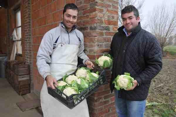 giovani agricoltori, coltivazione cavolfiori
