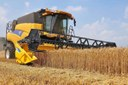 grano trebbiatura campo