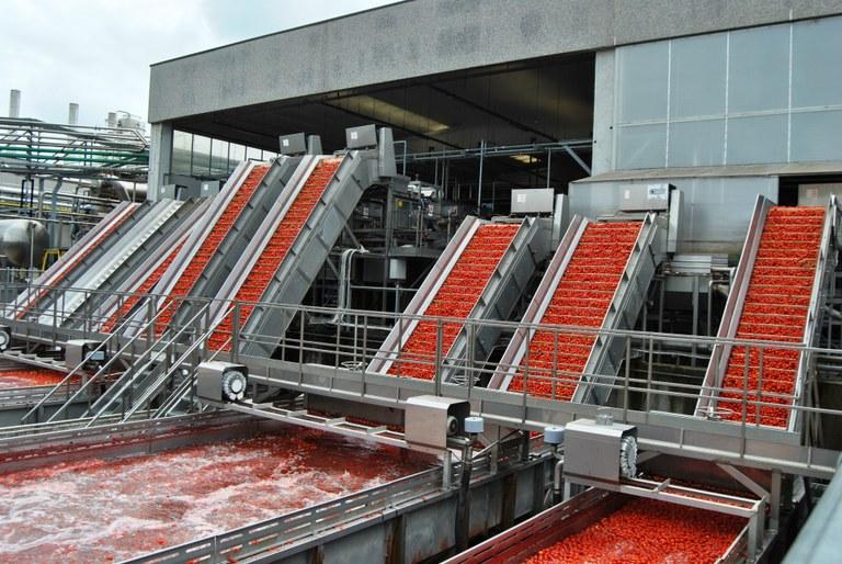 Lavorazione pomodoro. Stabilimento Conserve Italia Pomposa (Fe)