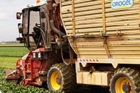 Orogel agro industria fabbrica agricoltura trattore campo coltivato
