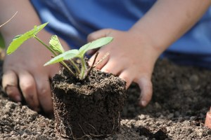 orto mani bambino terra pianta