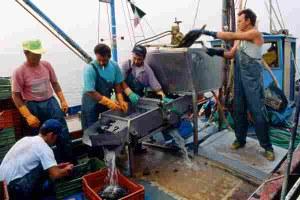 pesca imbarcazione