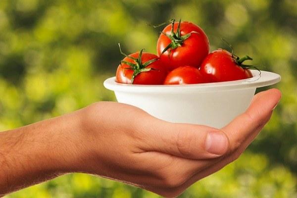 Pomodori, agricoltura, azienda agricola, pomodoro