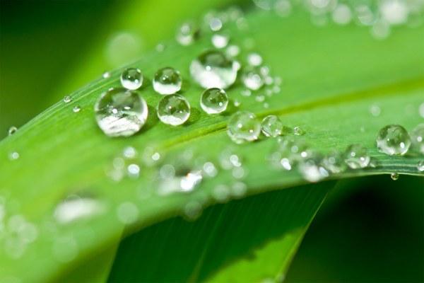 Protezione dell'ambiente, foglia