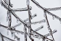 Rami gelo gelate agricoltura