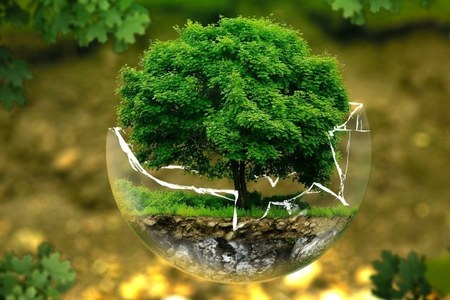 alberi clima futuro.jpg