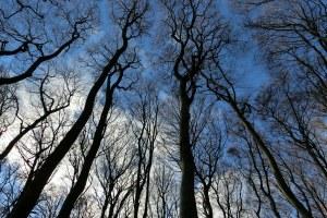 Alberi, foresta, bosco, ambiente al tramonto