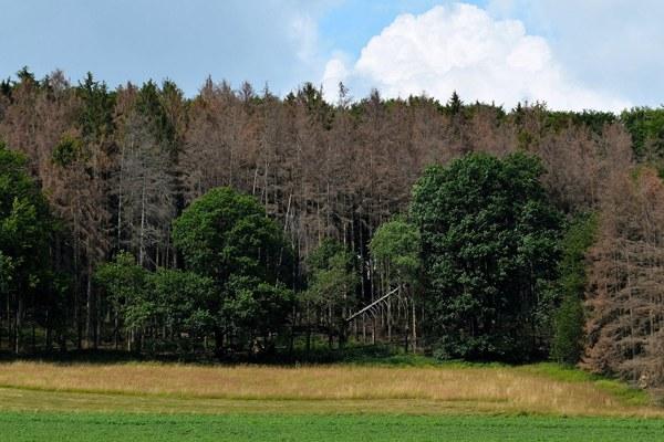 Alberi, bosco, ambiente, clima, cambiamento climatico