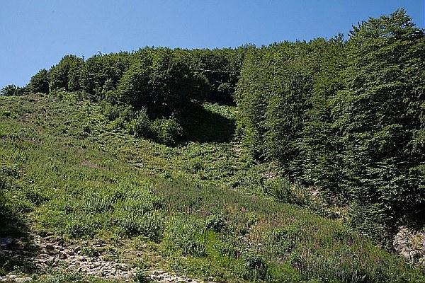 Bosco, foresta, ambiente, parco 2