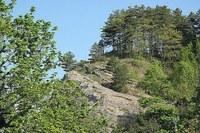 Bosco, foresta, ambiente, parco