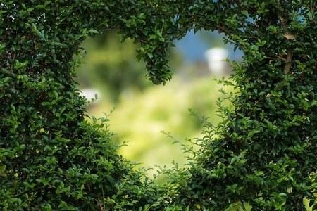 pianta giardino cuore verde