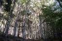 Faggete, foreste casentinesi, bosco, alberi