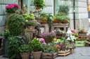 fiori piante fioraio semi negozio