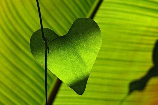 Foglia, natura, ambiente, sostenibilità ambientale