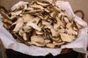 Funghi tagliati
