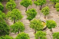 Green cities, riqualificazione urbana, città, città verdi, alberi, cemento, asfalto (Visualizza)