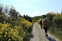 Parco, area protetta, Appennino bolognese, turismo, sentiero