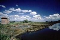 Parco del Delta del Po, ambiente, natura