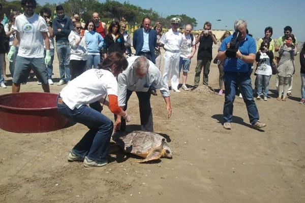 Tartaruga caretta, liberazione a Cesenatico