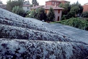 foto di Paolo Righi, Meridiana immagini