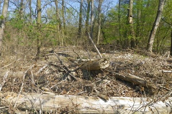 Tronche, alberi, alveo fiume