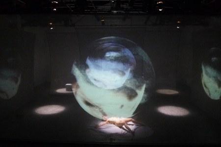 Lenz Fondazione_ spettacoli 2020 _ 2