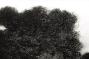Opera Dall'Olio - opere d'arte contemporanea selezionate per acquisizione 28/12/20