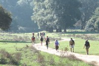Via Francigena, turismo, turisti, cammino (3)
