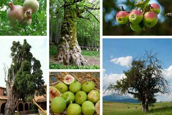 Frutteto della biodiversità di Arpae a FICO