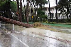 Maltempo in Romagna, albero caduto