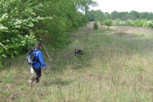 Unità cinofile formazione cani ritrovamento persone disperse