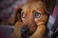 Animali d'affezione - cane