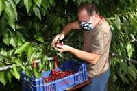 Lavoratore in agricoltura con mascherina, Coronavirus