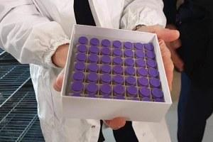 Il vaccino anti Covid di Pfizer-BioNtech