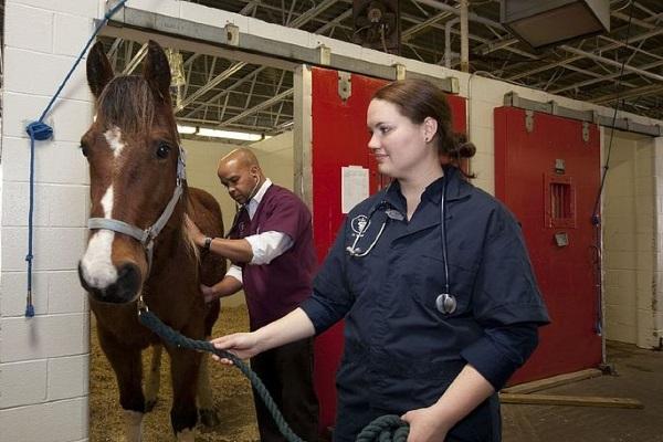 Veterinario cavallo stalla