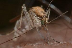 Lotta alle zanzare: sorveglianza anticipata sui virus