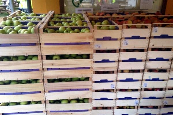 1 settembre 2016, consegna di frutta fresca